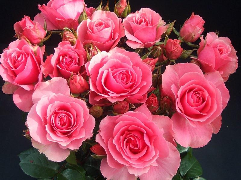 Картинки по запросу фото квітів