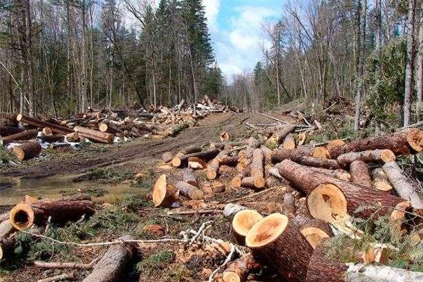 Карпати врятовано? ВРУ збільшила штрафи та посилила кримінальну відповідальність за незаконну вирубку лісу